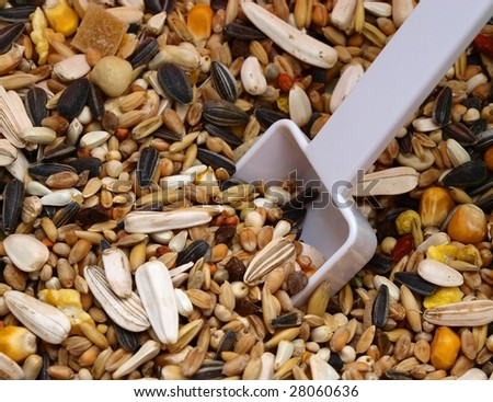 bird seed with spoon