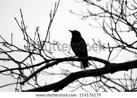 Bird Silhouette - stock photo