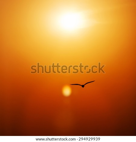bird silhouetted flying in sunset  - stock photo