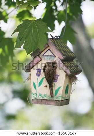 bird sitting on birdhouse - stock photo