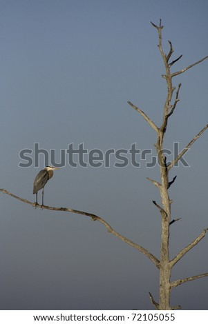 Bird sitting on lone limb of barren tree against blue sky - stock photo