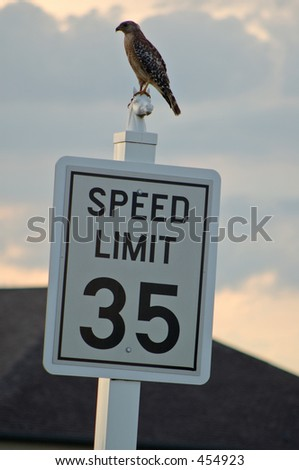 Bird sitting on top of Speed limit sign - stock photo