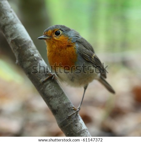 Bird sitting on tree's branch and looking to camera - stock photo