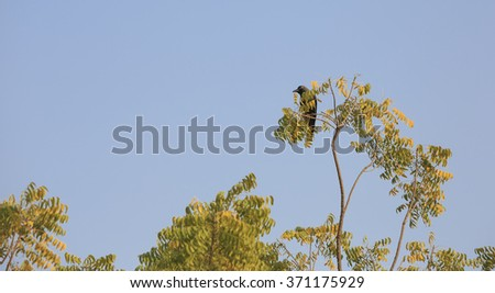 Bird spotting from the top of a tree