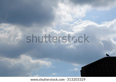 bird stand on the roof  with blue sky and white cloudy background - stock photo