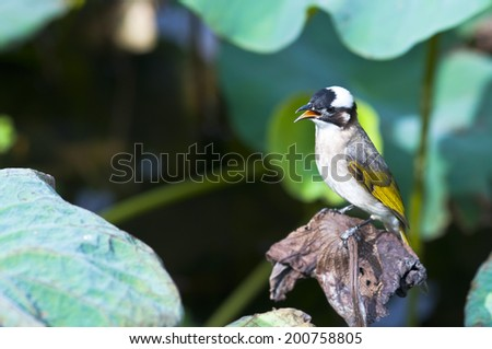 bird standing alone on a lotus leaf
