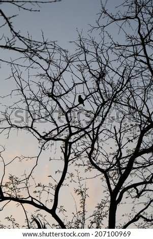 Bird standing on a tree at dusk - stock photo