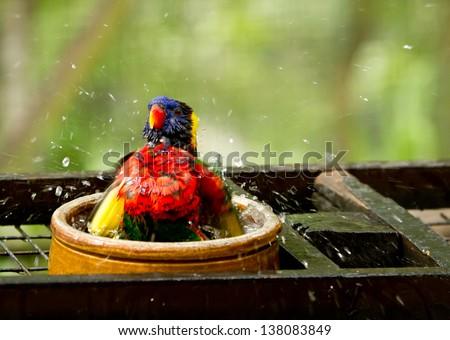 bird taking a shower feeling good - stock photo