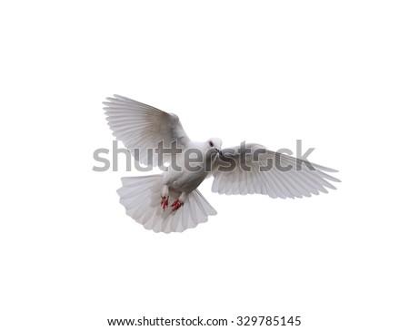 Bird White pigeons Flying - stock photo