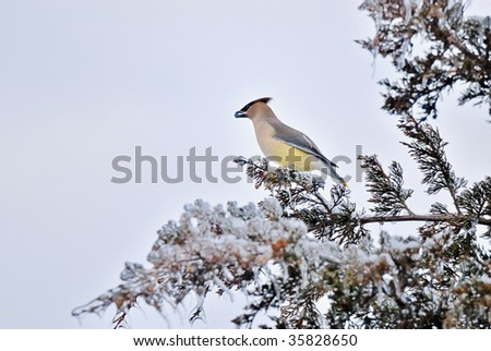 Bird with Berry in Mouth in Tree - stock photo