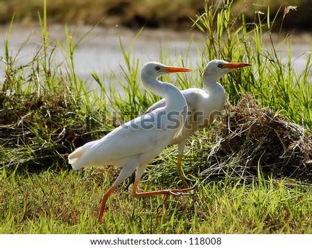 Birds - stock photo