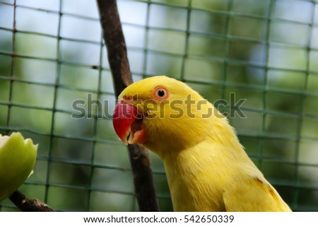 Birds and animals in wildlife. Image contain certain grain or noise and soft focus.