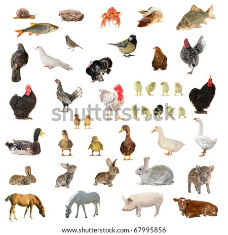 Birds and animals on a white background - stock photo