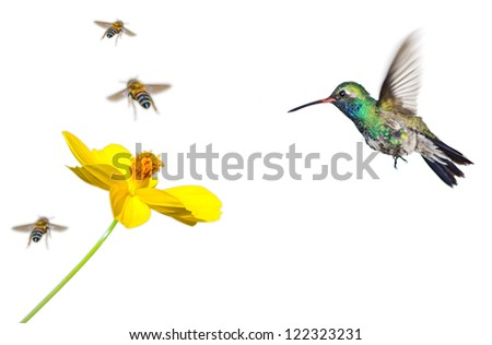 Birds and Bees isolation - stock photo