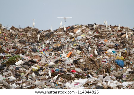 Birds and dogs on the landfill Thailand - stock photo