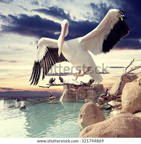Birds and sunset surreal  landscape.Surreal dream scape and birds - stock photo