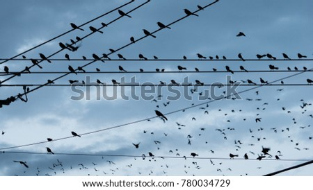 Birds come togher on a wire near sunset downtown