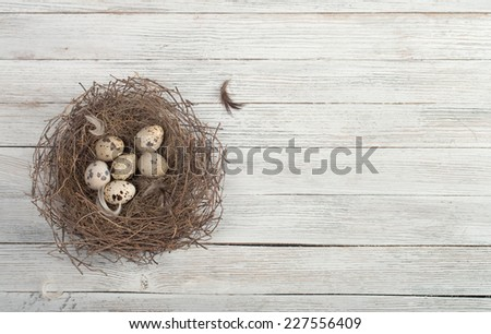 birds eggs in nest on rustic wooden background - stock photo