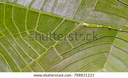 Birds eye view of terraced rice fields in Bali, Indonesia.
