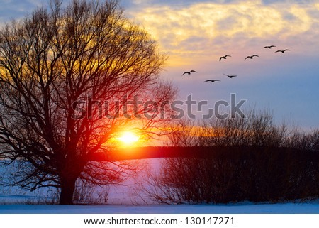 Birds flies to the tree on sunset