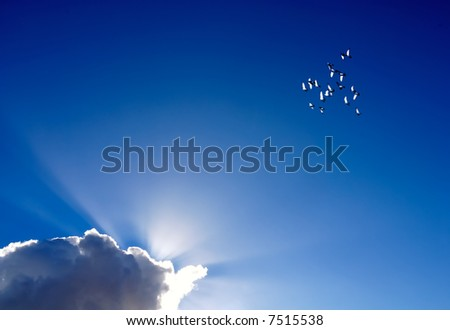 birds flight - stock photo