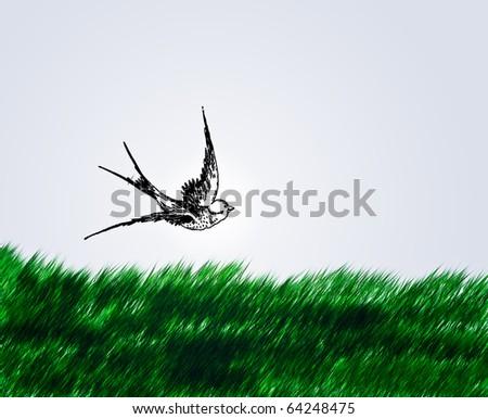 Birds fly - stock photo