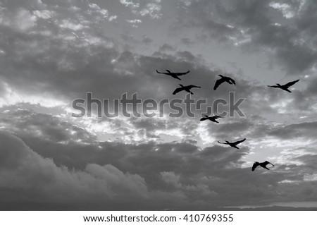 Birds fly as the Sunrise - stock photo