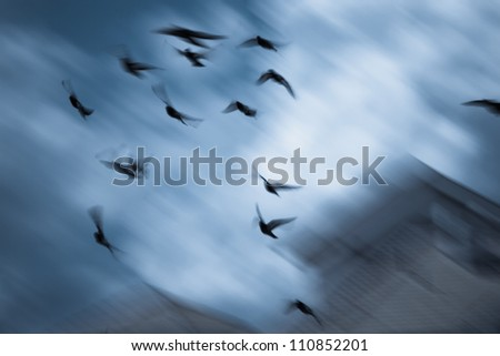 birds fly over roofs long exposure