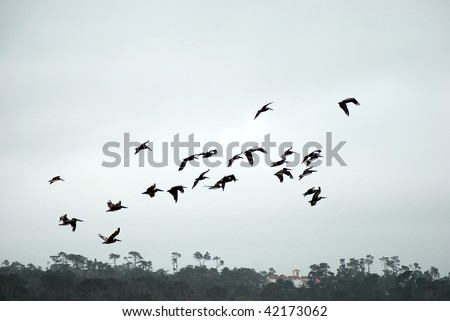 Birds Flying - stock photo