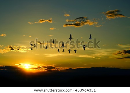 Birds flying against blue evening sunset in the background environment or ecology concept - stock photo