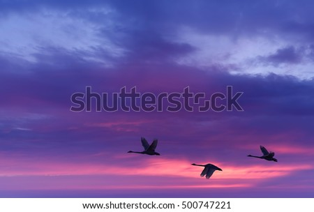 Birds flying against purple evening sunset in the background environment or ecology concept
