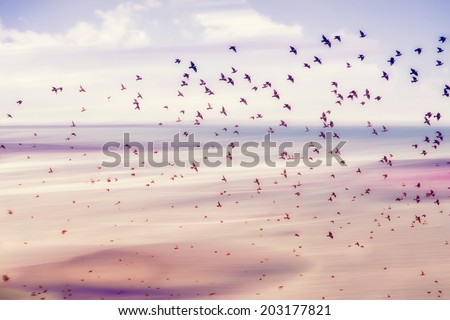 birds flying and abstract sky ,spring background abstract happy background,freedom birds concept,symbol of liberty and freedom  - stock photo