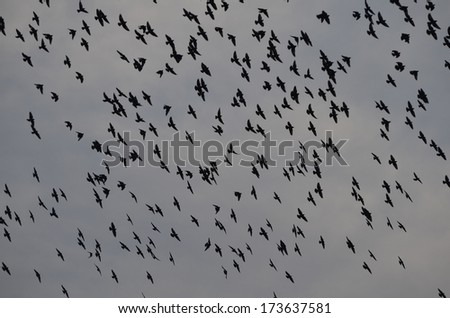 Birds flying high freely in the blue sky, a perfect natural background