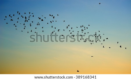 Birds flying in formation on a blue and yellow summer Sky