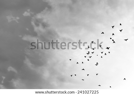 Birds flying in the blue sky . - stock photo