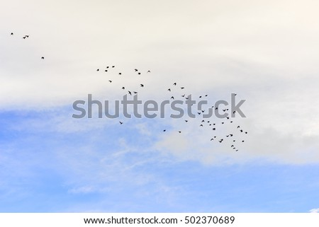 birds flying in the blue sky with white clouds