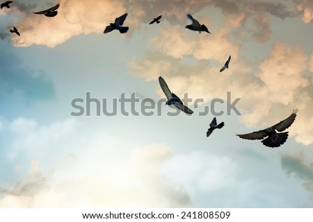 Birds flying in the sky - stock photo