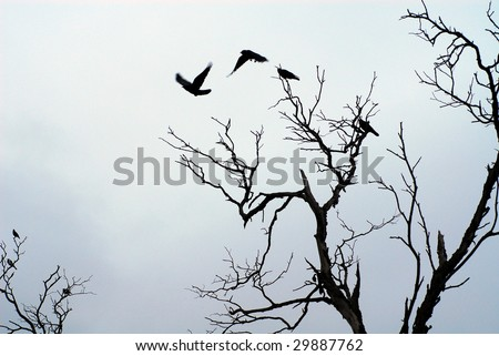 birds flying off  dead tree branches