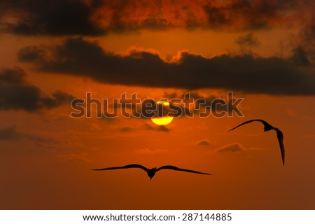 Birds flying silhouette high in the sky in the sky and a bright yellow and orange sun glowing sky in the background. - stock photo