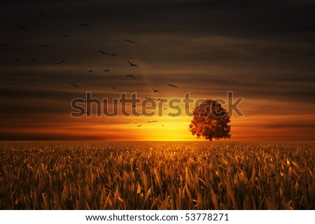 birds flying to the tree with nice sundown in back - stock photo