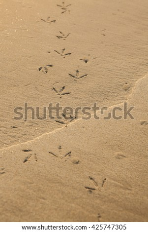 Birds footprints with golden