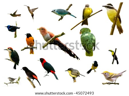 birds from Costa Rica - stock photo