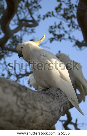 Birds in Australia - stock photo