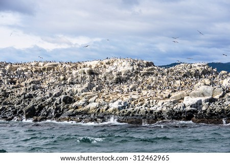 Birds in Beagle Channel, Ushuaia, Argentina - stock photo