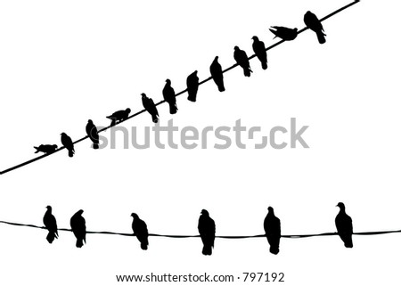 Birds in Pure Black and White - stock photo