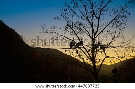 Birds in sunset silhouette  - stock photo