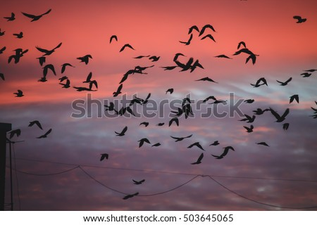 Birds in the beautiful sky