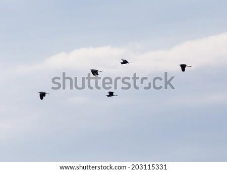 birds in the sky - stock photo