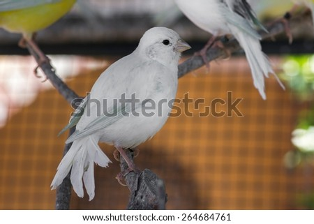 Birds living in cage - stock photo