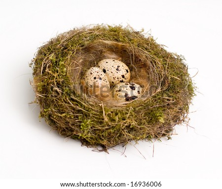 Birds nest with eggs at white background - stock photo
